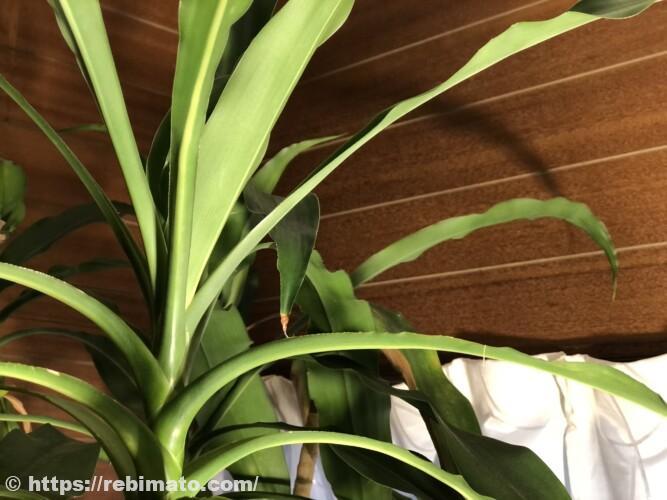 SINJIAlight 植物育成ライトLED